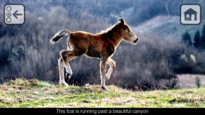 Foal iPhone